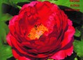 Peony Booklet in English
