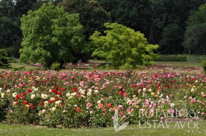Průhonická bot zahrada - expozice 2017 (4)