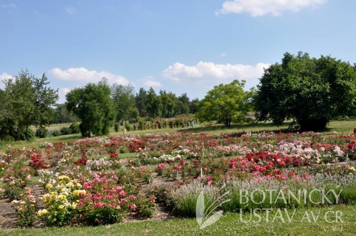 Průhonická bot zahrada - expozice 2017 (9)