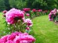 Chotobuz Botanic Garden in  Pruhonice