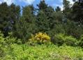 Alpinum - čemeřicová stráň