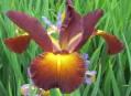 Evidence genetických zdrojů rostlin