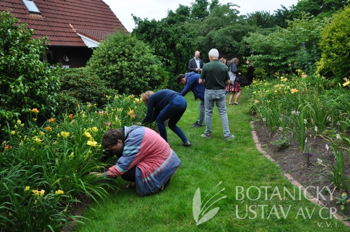 Hemerocallis breeding workshop