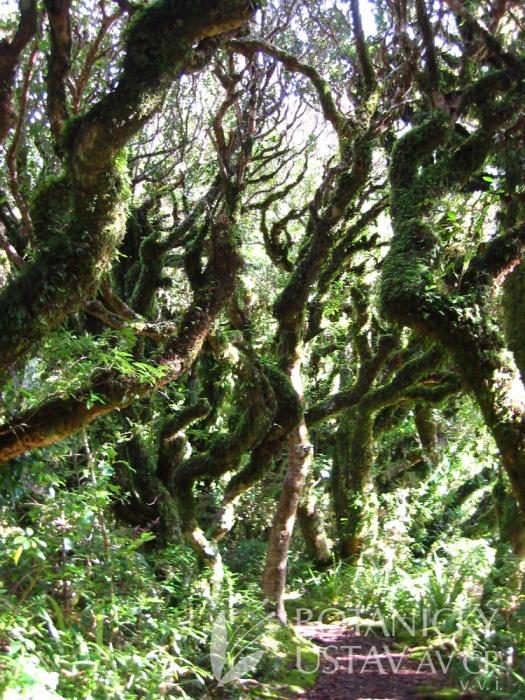 Les skřítků
