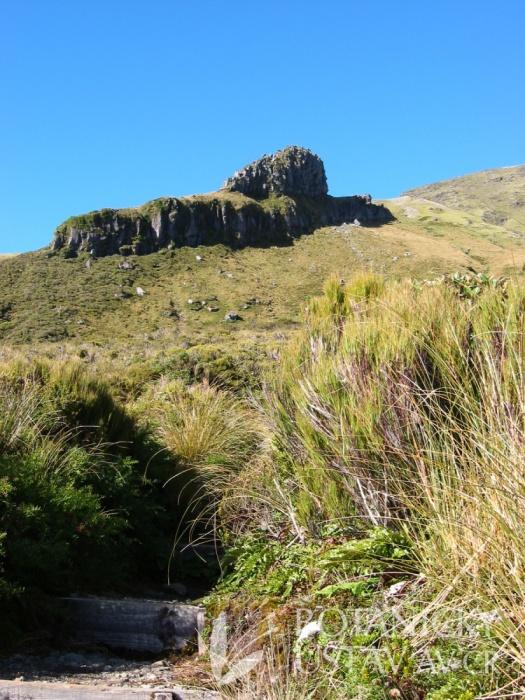 Grasses in Taranaki NP