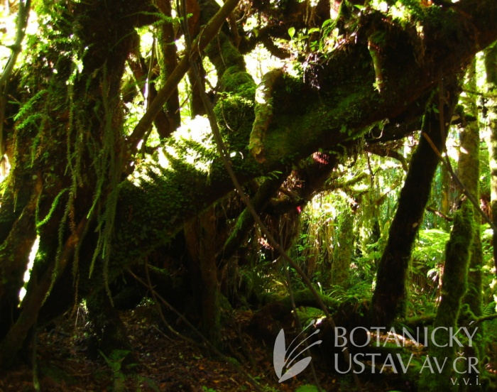 Moss and Fern Forest