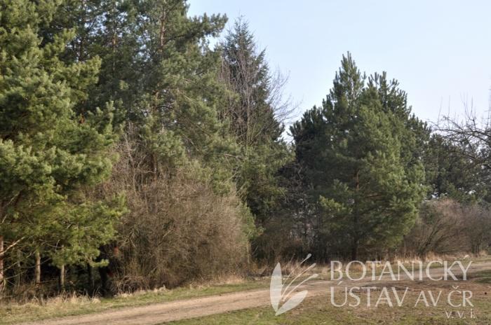 Arboretum I, 2012 (3)