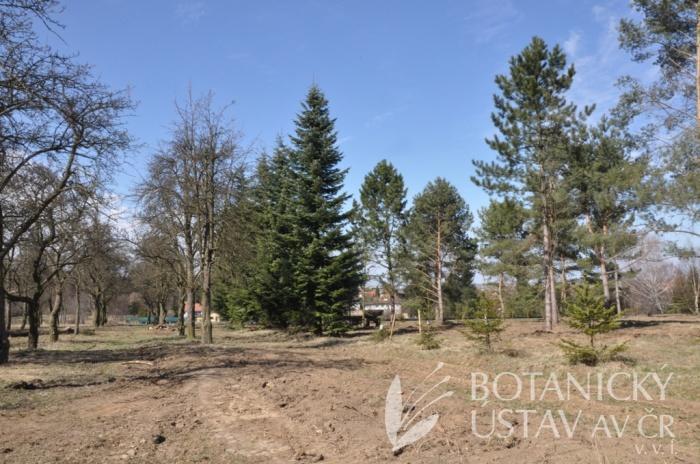 Arboretum I, po probírkách, 2013