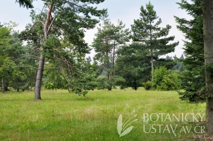 Místo plánované expozice botanických denivek
