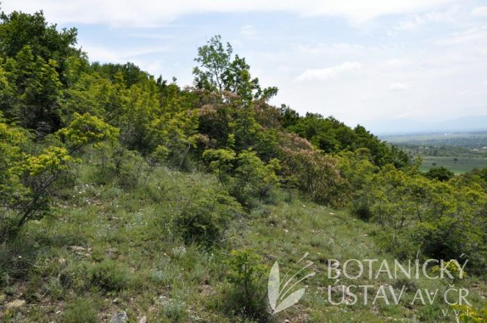 lokalita Paeonia tenuifolia, Gruzie