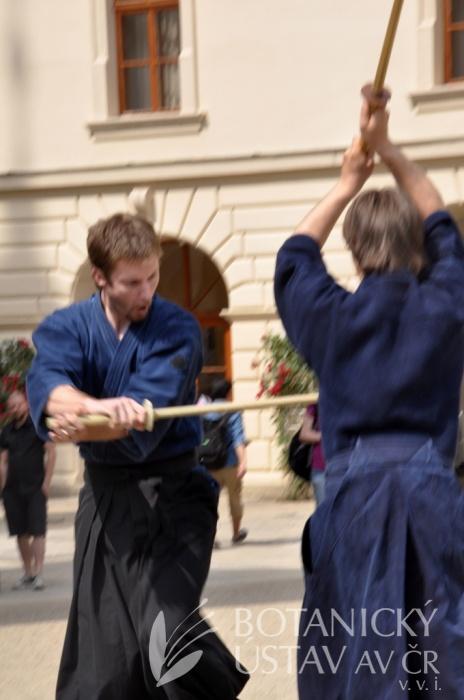Japonský den 2015 - bojová umění (48)