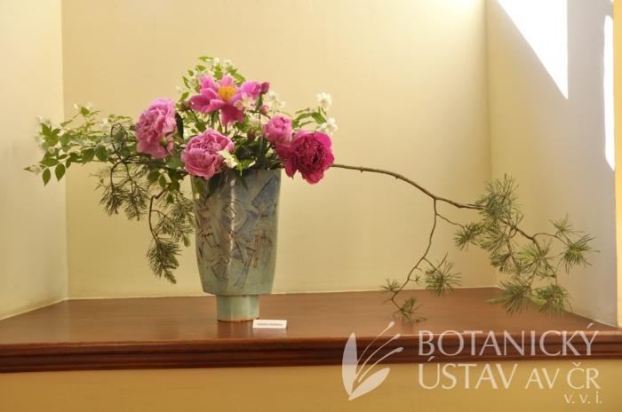Japonský den 2015 - výstava ikebany (9)