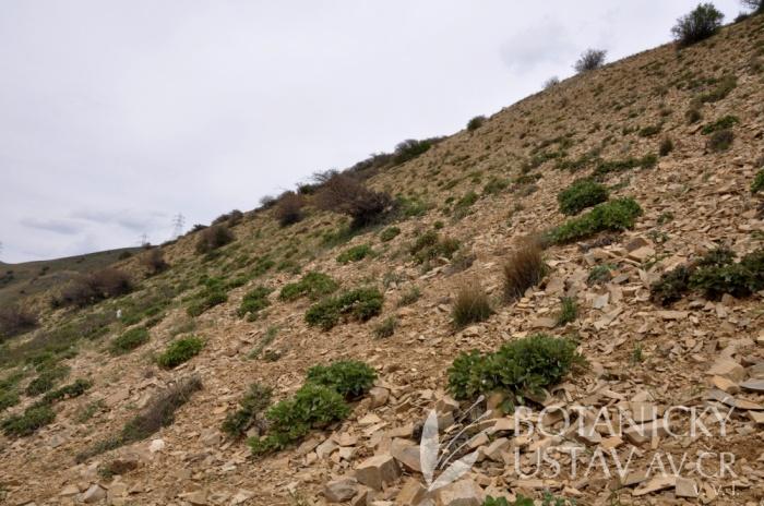 lokalita Paeonia wendelboi, Írán