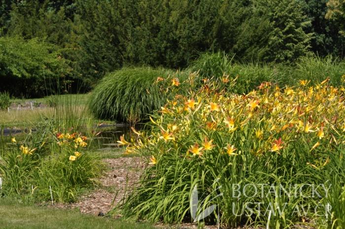 Průhonická botanická zahrada - expozice denivek 2017