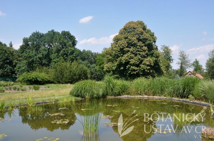 Průhonická botanická zahrada - expozice 2017