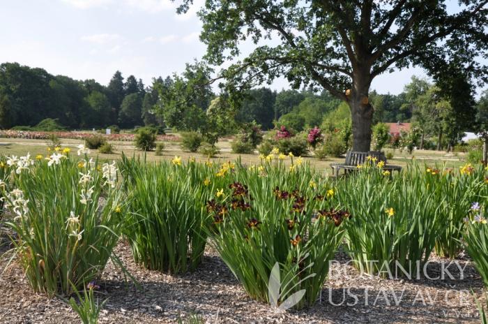 Průhonická botanická zahrada - expozice kosatců 2018