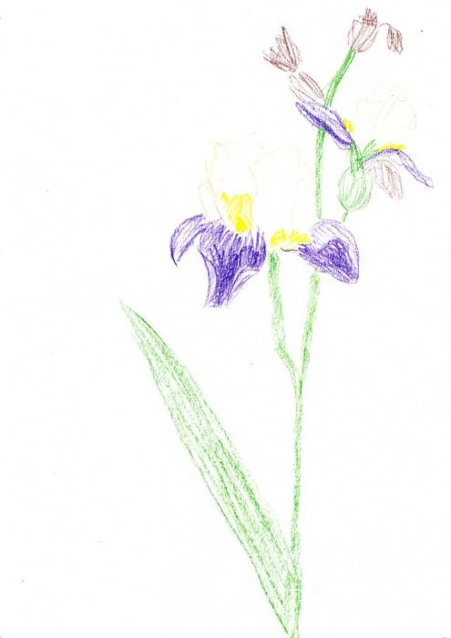Anežka Devátá, 10 let, Průhonice