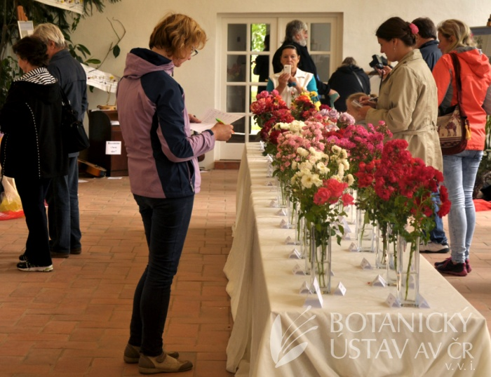 výstava růží Veltrusy (1)
