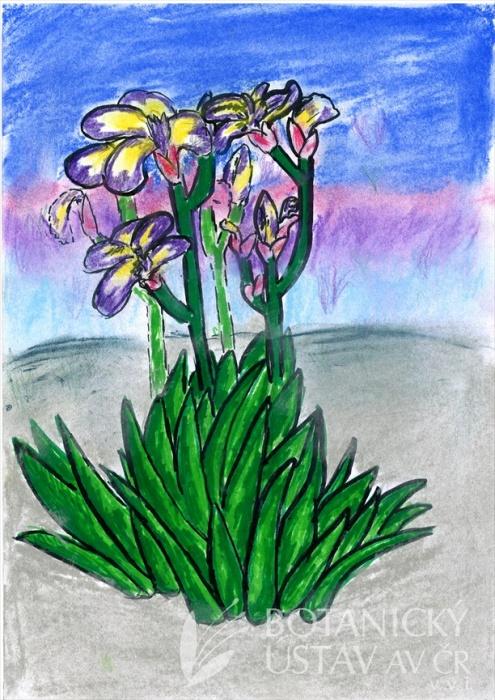 Trvalkový víkend a malování v zahradě 2019