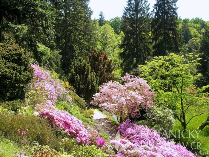 Průhonický park - kvetoucí keře v alpinu