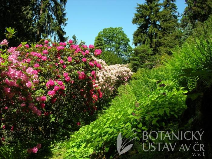 Průhonický park - Staré alpinum