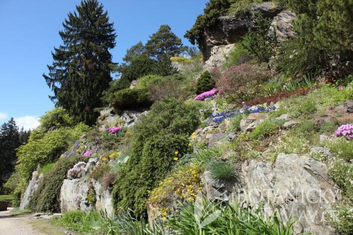 Průhonický park - Alpinum