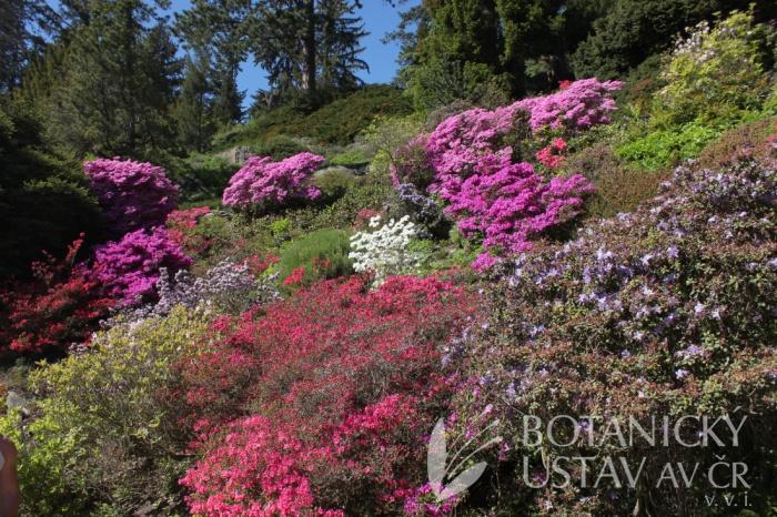 Průhonický park - Centrální alpinum