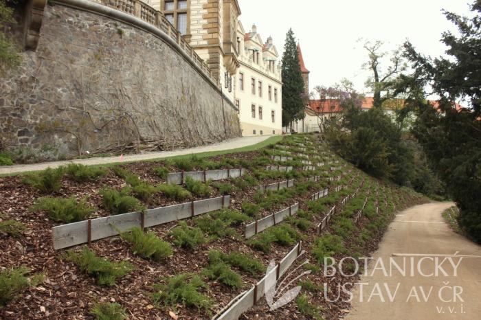 Průhonický park - Podzámecké alpinum