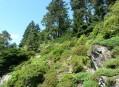 Skalnaté výchozy nad Alpinem