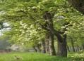 Pomologické arboretum - hrušně