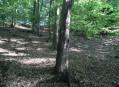 Dubohabřiny pod Bořínem