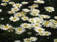 Květnatá louka